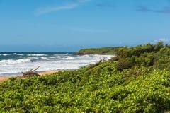 在海滩的植被在考艾岛,夏威夷 免版税库存图片