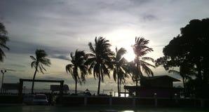 在海滩的椰子两次点燃阴影和siluet 免版税库存图片