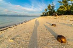在海滩的椰子在日落 免版税图库摄影