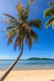 在海滩的椰子树与清楚的蓝天 免版税库存照片