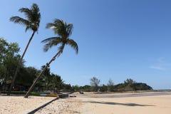 在海滩的椰子树 库存图片