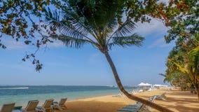 在海滩的椰子树 免版税库存图片