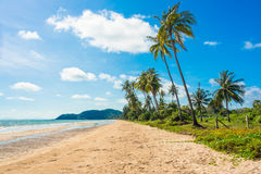 在海滩的椰子树 免版税图库摄影
