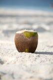 在海滩的椰子 库存照片