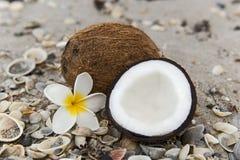 在海滩的椰子 免版税库存图片