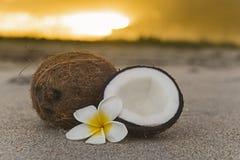 在海滩的椰子 免版税图库摄影