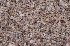 在海滩的残破的壳 免版税库存图片