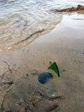 在海滩的残破的瓶 免版税库存图片