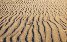 在海滩的沙波 库存照片