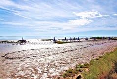 在海滩的法国Camargue马 库存照片