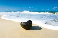 在海滩的波浪用作为问题的老椰子的兴趣 库存照片