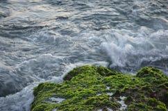 在海藻的波浪 免版税图库摄影