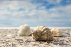 在海滩的海壳反对天空 免版税库存图片