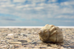 在海滩的海壳反对天空 库存照片