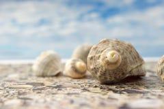 在海滩的海壳反对天空 库存图片