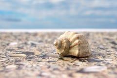 在海滩的海壳反对天空 免版税库存照片