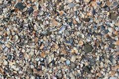 在海滩的海壳 库存照片