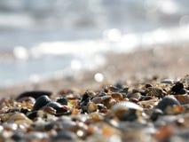 在海滨的海扇壳 库存图片