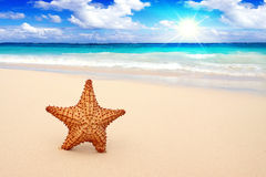 在海滩的海星。 免版税图库摄影