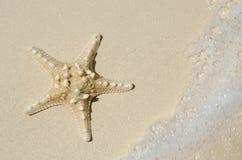 在海滩的海星与进来的浪潮 库存照片