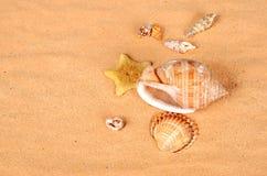 在海滩的海星和贝壳 免版税库存照片