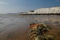 在海滩的海星由七个姐妹 免版税库存图片