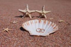 在海滩的海星 免版税库存照片