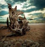 在海滩的海景漂流木头 库存图片