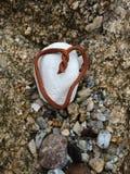 在海滩的海草心脏 库存照片