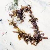 在海滩的海草 免版税图库摄影
