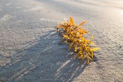 在海滩的海草 库存图片