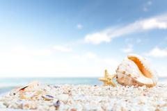 在海滩的海运壳 免版税库存图片