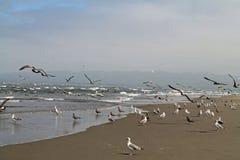 在海滩的海鸥在一有雾的天 免版税库存照片