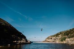 在海洋的海鸥在葡萄牙 免版税库存图片