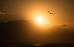 在海洋的海鸥日出 免版税图库摄影