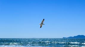 在海滩的海鸥飞行 免版税库存图片