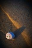 在海滩的海洋蜗牛 免版税库存图片