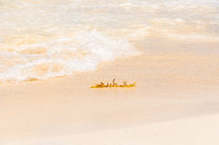 在海滩的海藻 库存照片