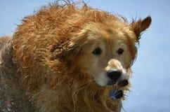 在海滩的湿小狗 免版税库存照片