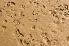 在海滩的湿沙子的失去的步 库存图片