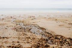 在海滩的湿沙子 库存照片