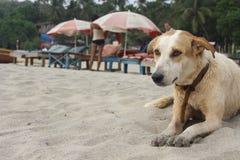 在海滩的湿狗 免版税库存照片