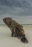 在海滩的漂流木头与风雨如磐的天空 库存照片