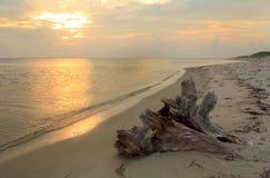 在海滩的漂流木头在日出 免版税库存图片