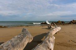 在海滩的漂流木头在El法鲁,厄瓜多尔 库存照片