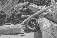在海滩的漂流木头 免版税库存图片