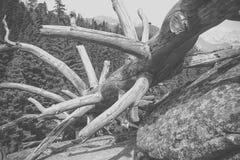在海滩的漂流木头 免版税库存照片