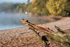 在海滩的漂流木头 免版税图库摄影
