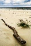 在海滩的漂流木头 库存图片