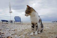 在海滩的灰色猫 免版税库存照片